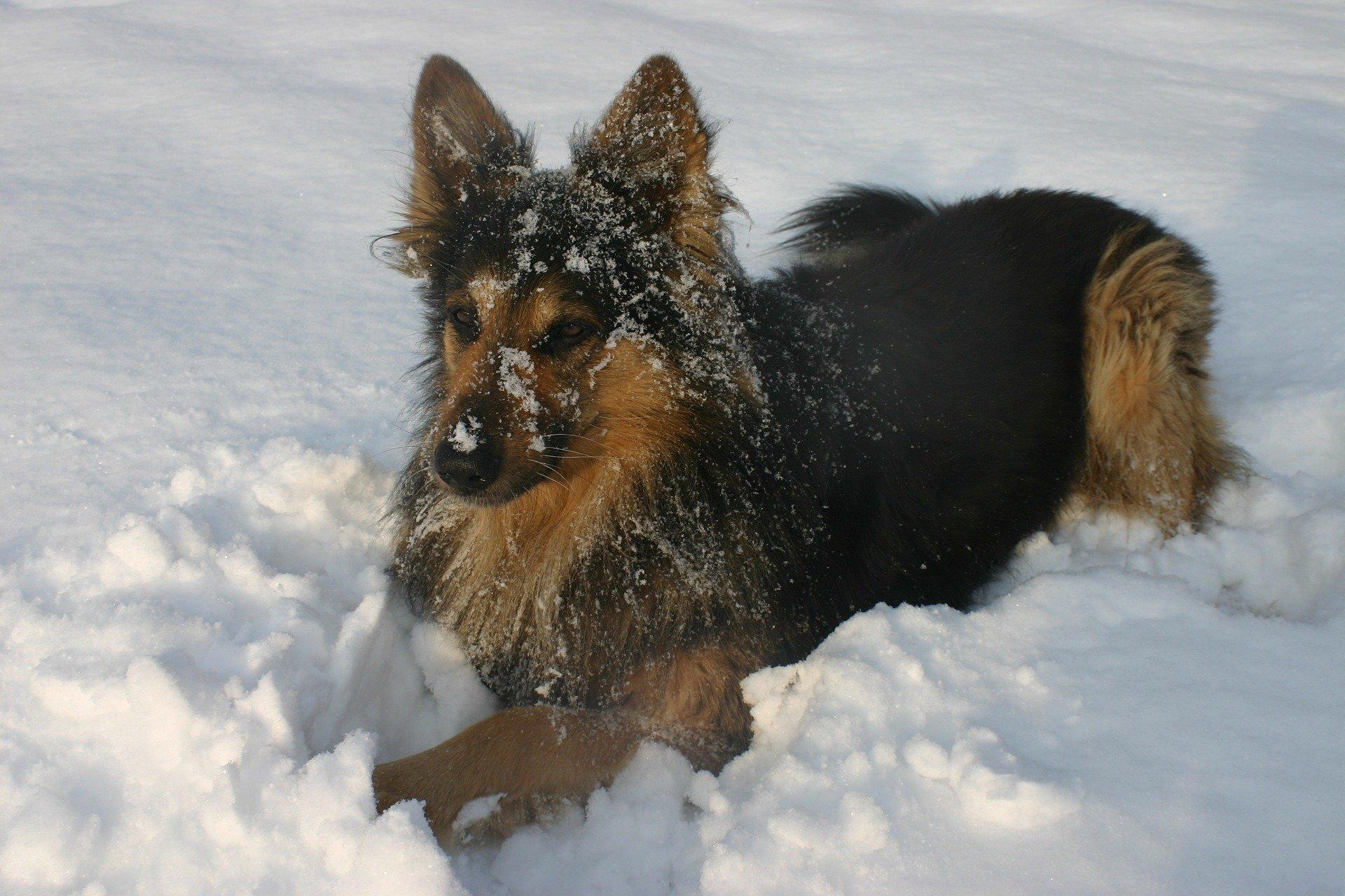 Alimentazione del cane in inverno: la dieta per Fido