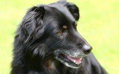 Cura artrite del cane e cura artrosi del cane