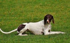Temperatura corporea del cane: come misurarla