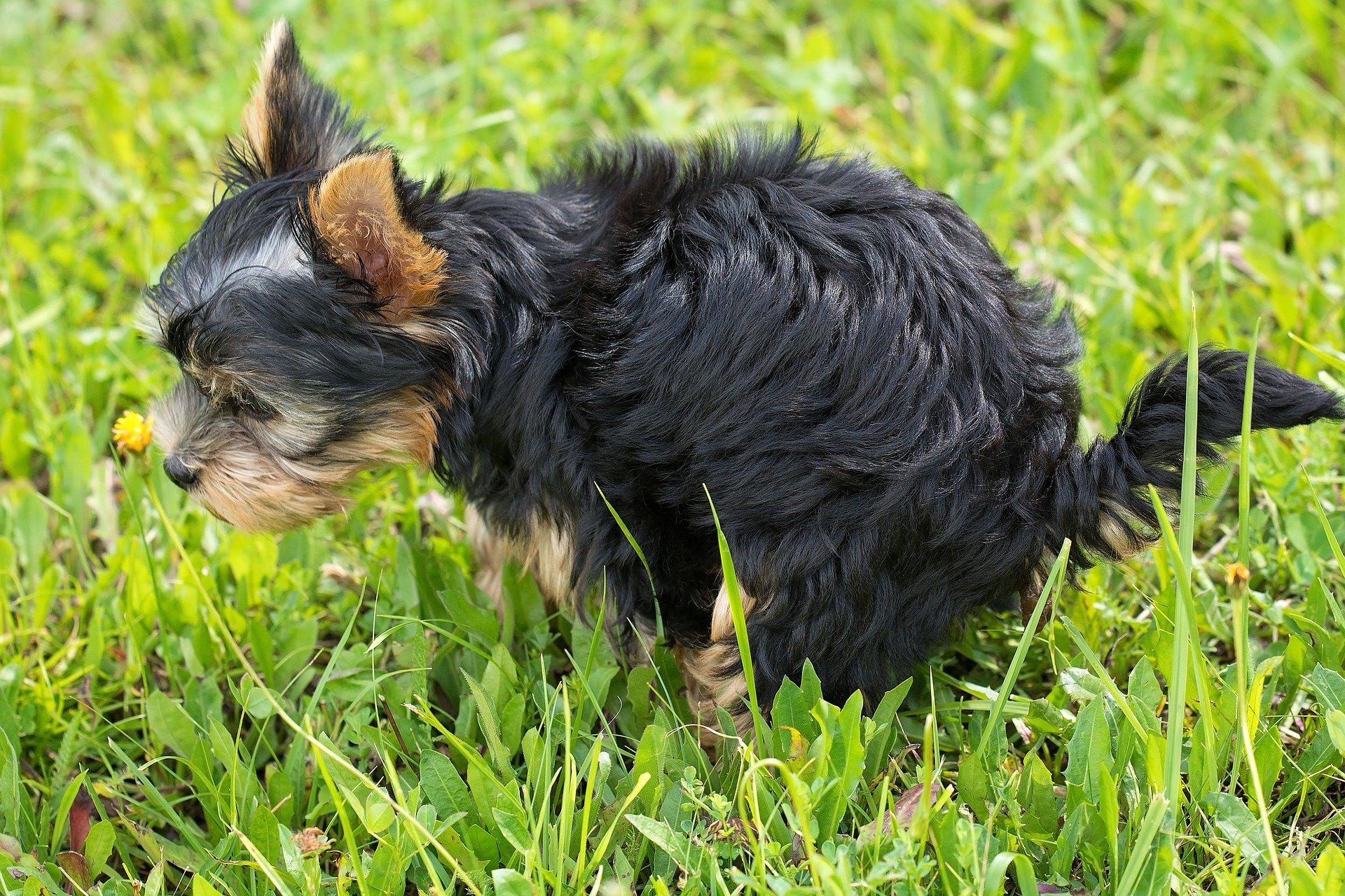 Come educare un cane che sporca a non fare i bisogni in casa