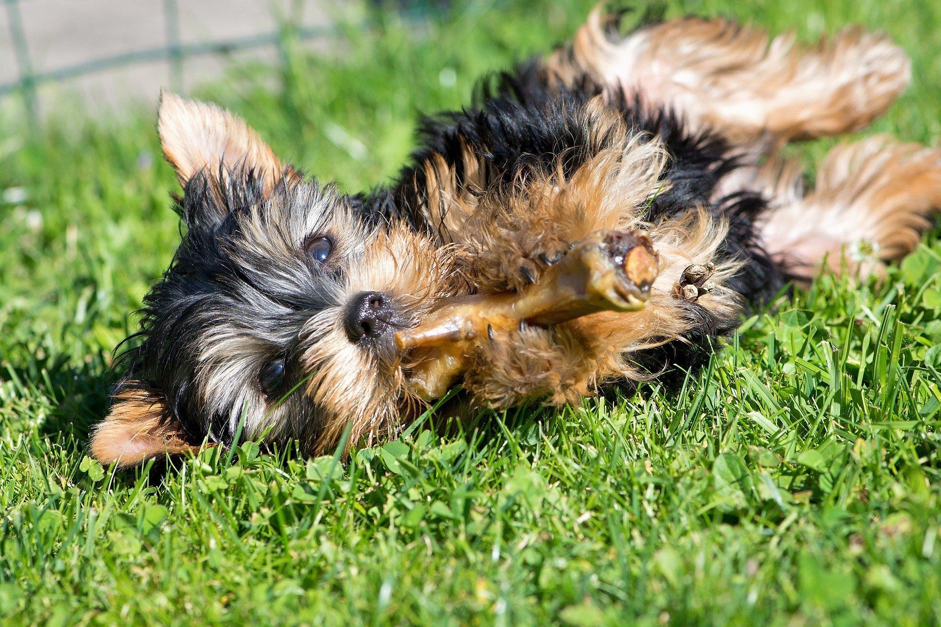 Qual è l' alimentazione corretta per il cane?