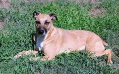 Dog disease: Pyometra in Dogs Symptoms and Treatment