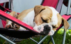 Brandine per cani, la scelta migliore per i dolci sogni di Fido