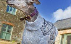 Cappottini per cani, un accessorio o una necessità?