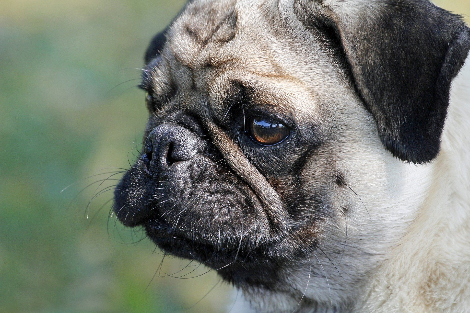 Dog disease: Colds in Dogs Symptoms and Treatment