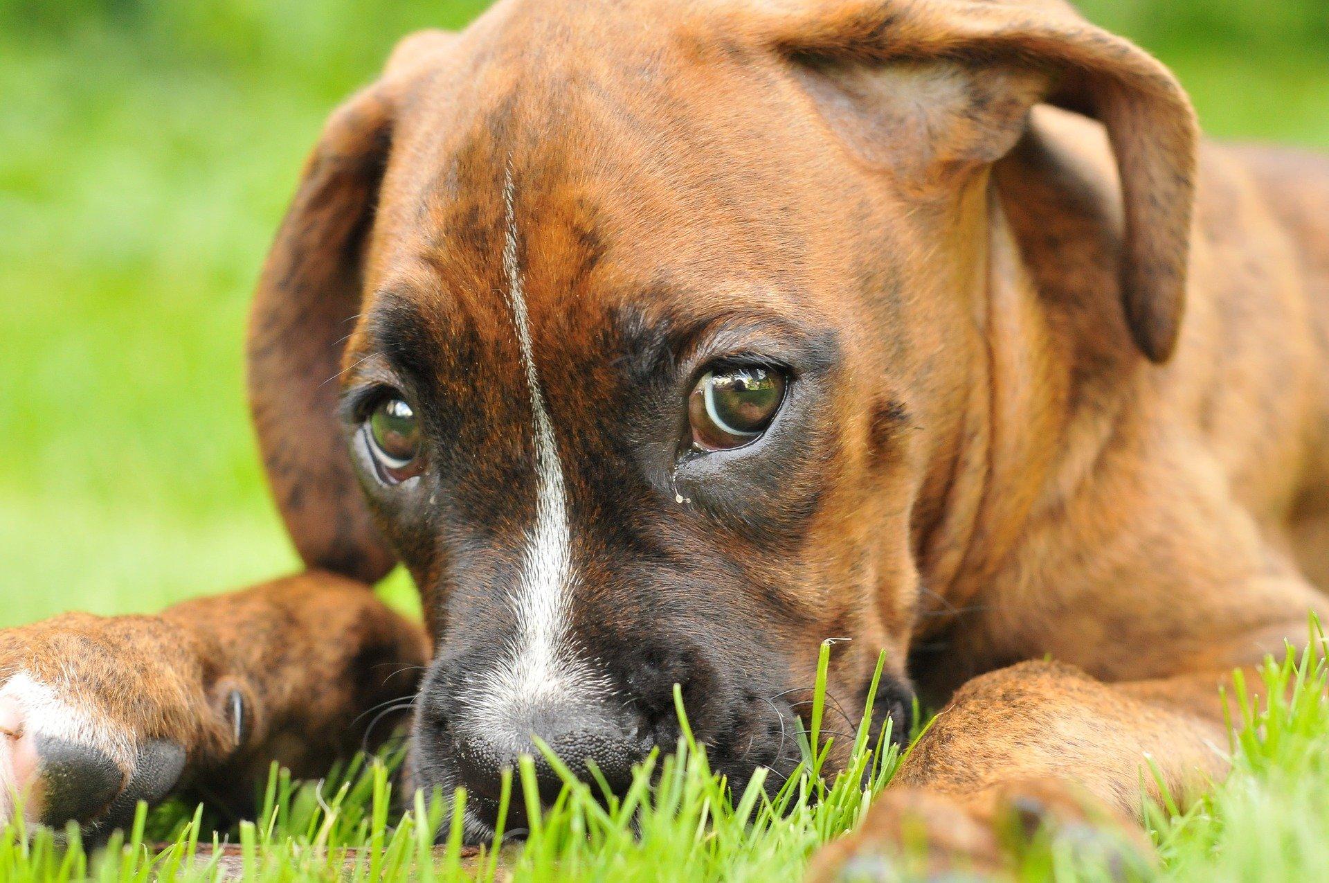 Alimentazione del cane in caso di diarrea