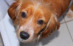 Fermenti lattici per cani: quando e perchè