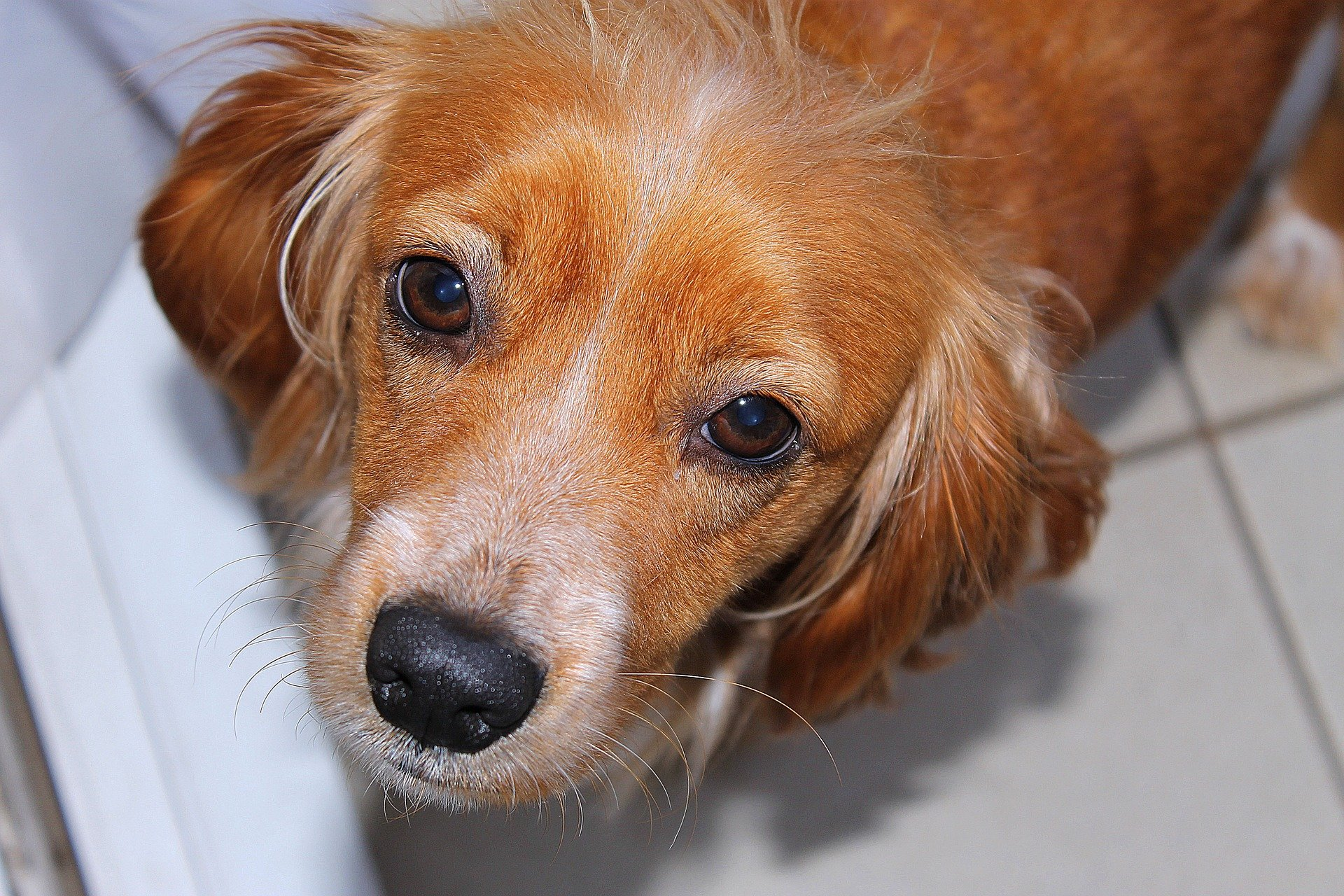 Dog diseases: Toxoplasmosis in dogs, symptoms and treatment