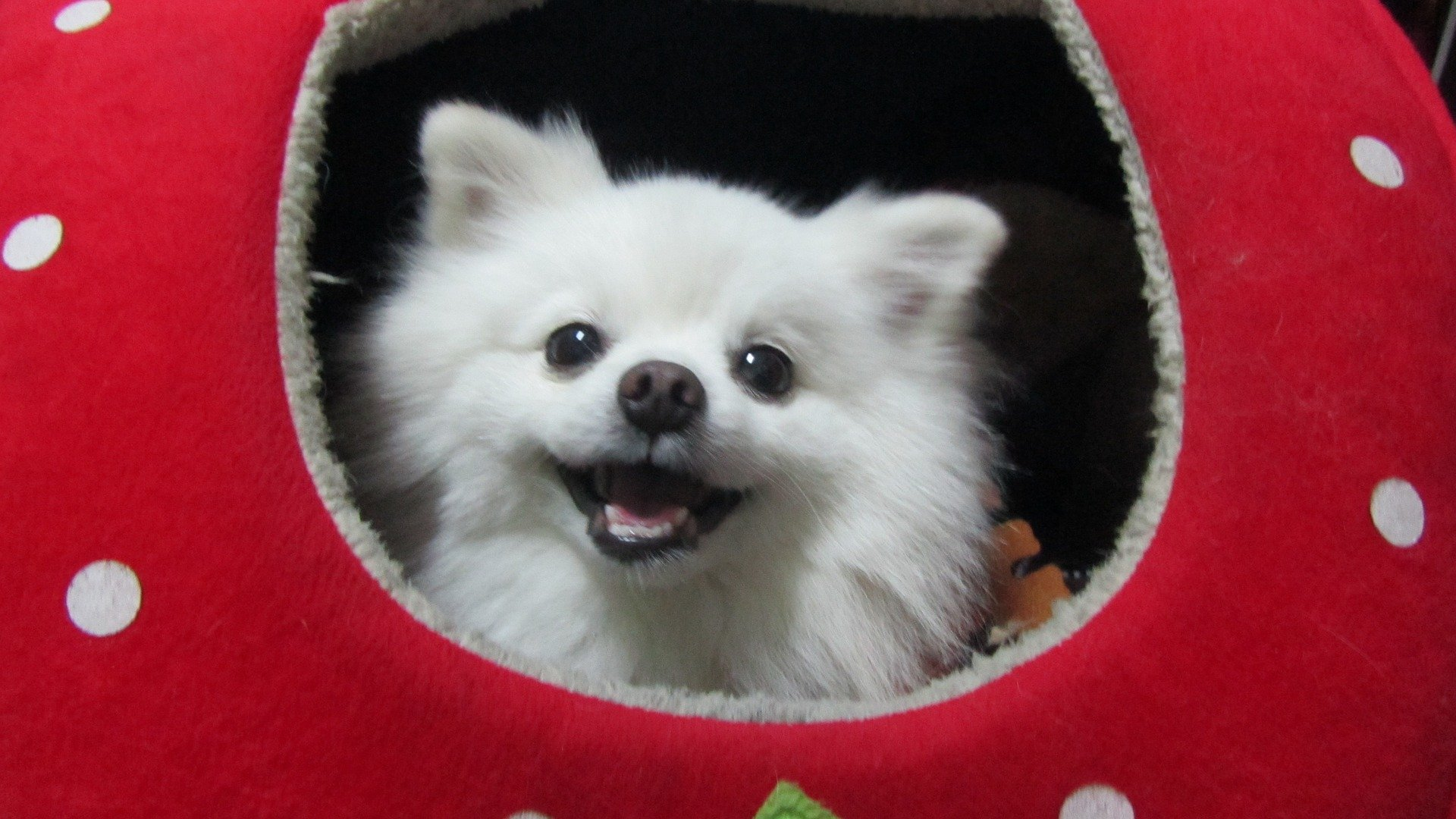Cute dogs: Why are dogs so cute? Let's find out!