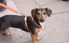 Accessori per la cura del cane: quali è necessario avere?