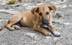 Piano del governo per abbattere i cani randagi