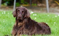 Fleas in Dogs - What are the dangers and how to prevent them