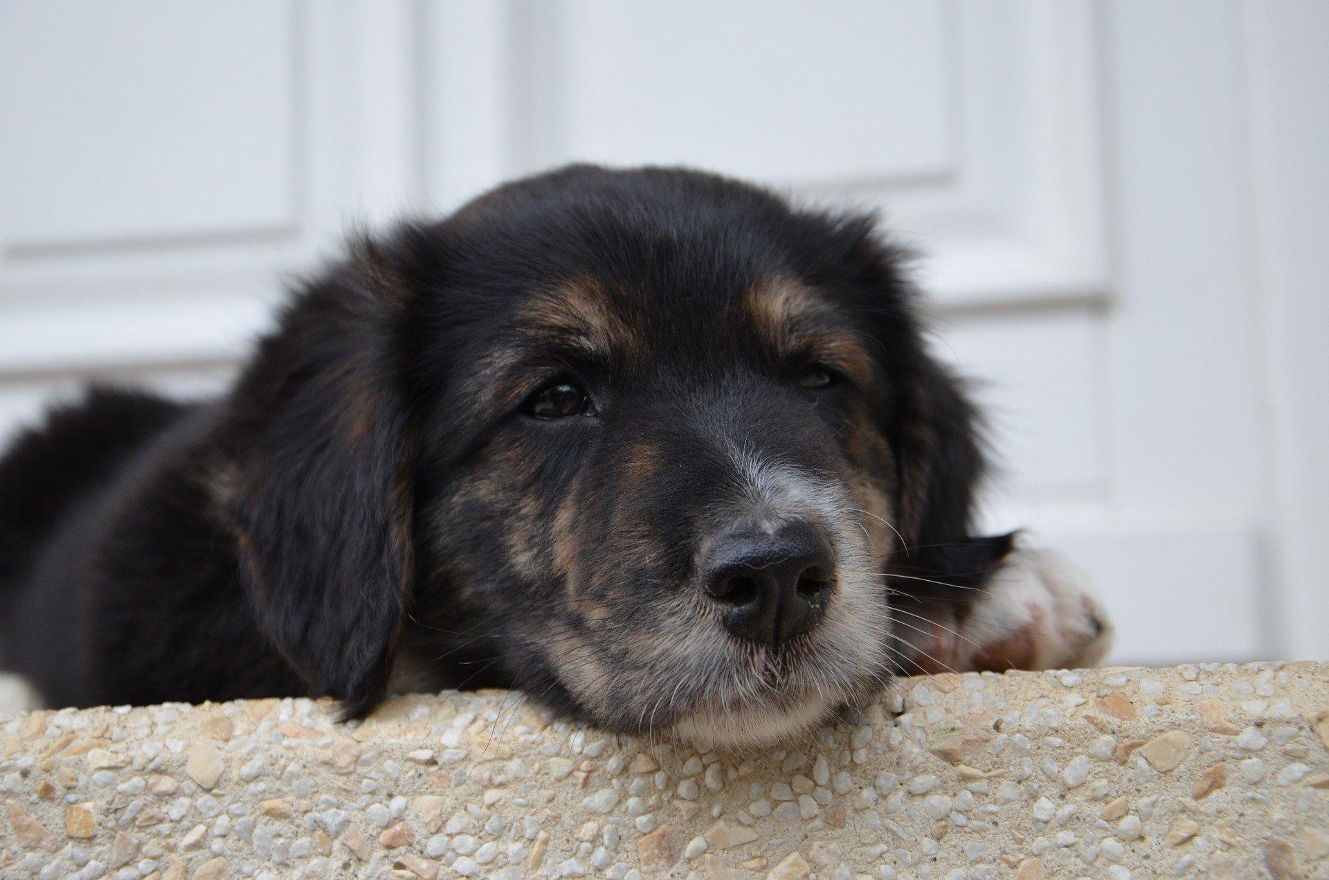 Alimentazione del cane anemico, cosa dargli da mangiare