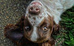 Malattie del cane agli occhi: quali sono e i sintomi