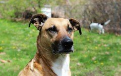 Dog disease: Rabies in dogs Symptoms and Treatment