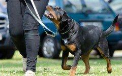 Tecniche di educazione del cane, pazienza e costanza