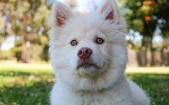 Tenere i cani lontani: i prodotti repellenti per cani