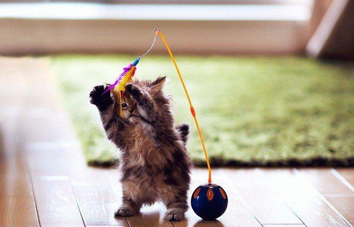 Como educar a un gato: consejos utiles