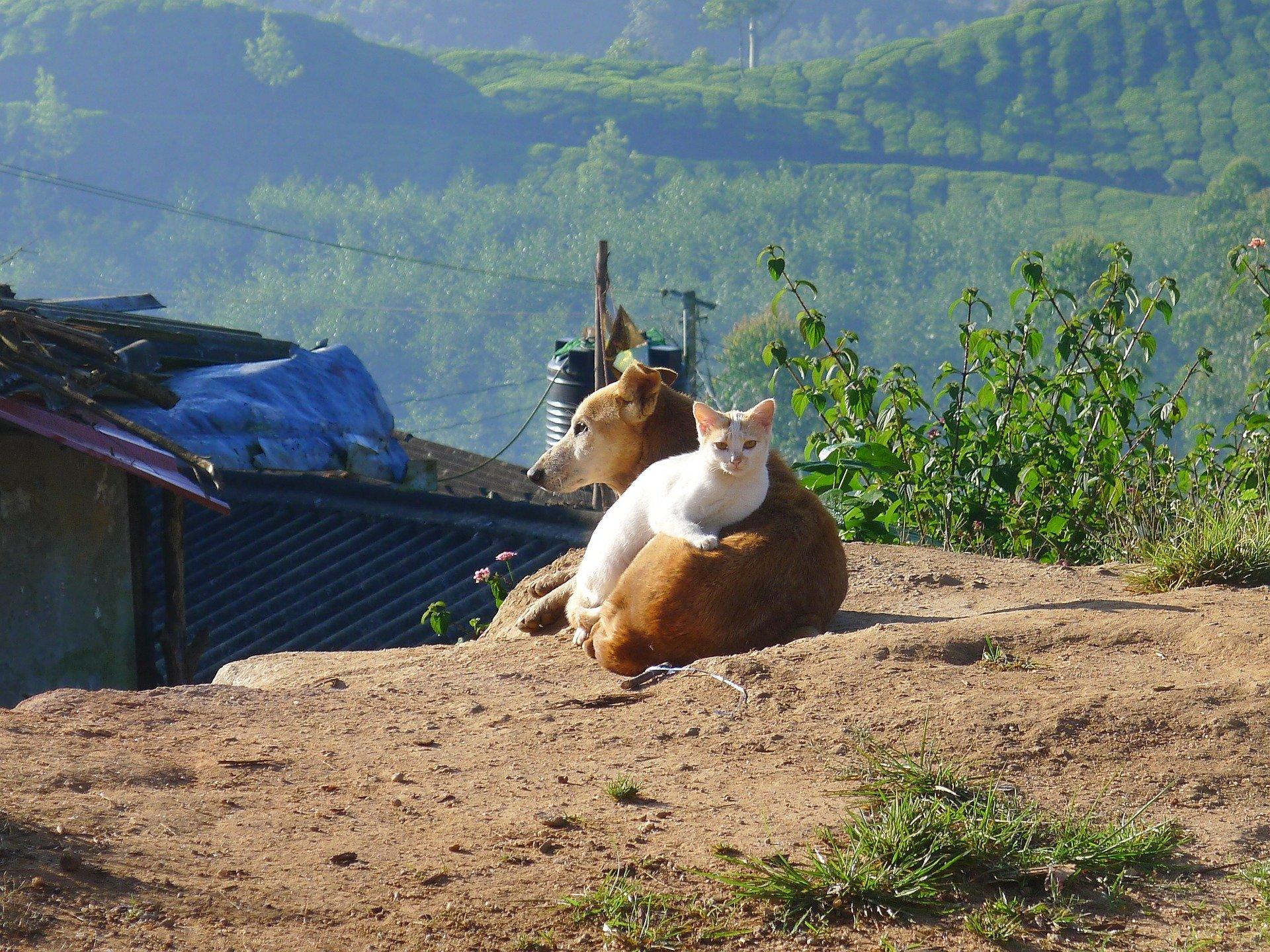 San Francisco: in vendita solo cani e gatti abbandonati