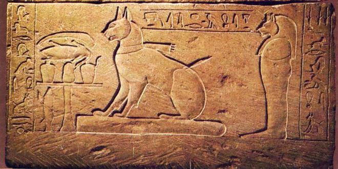 Origen de los gatos: caracteristicas de la especie de felinos
