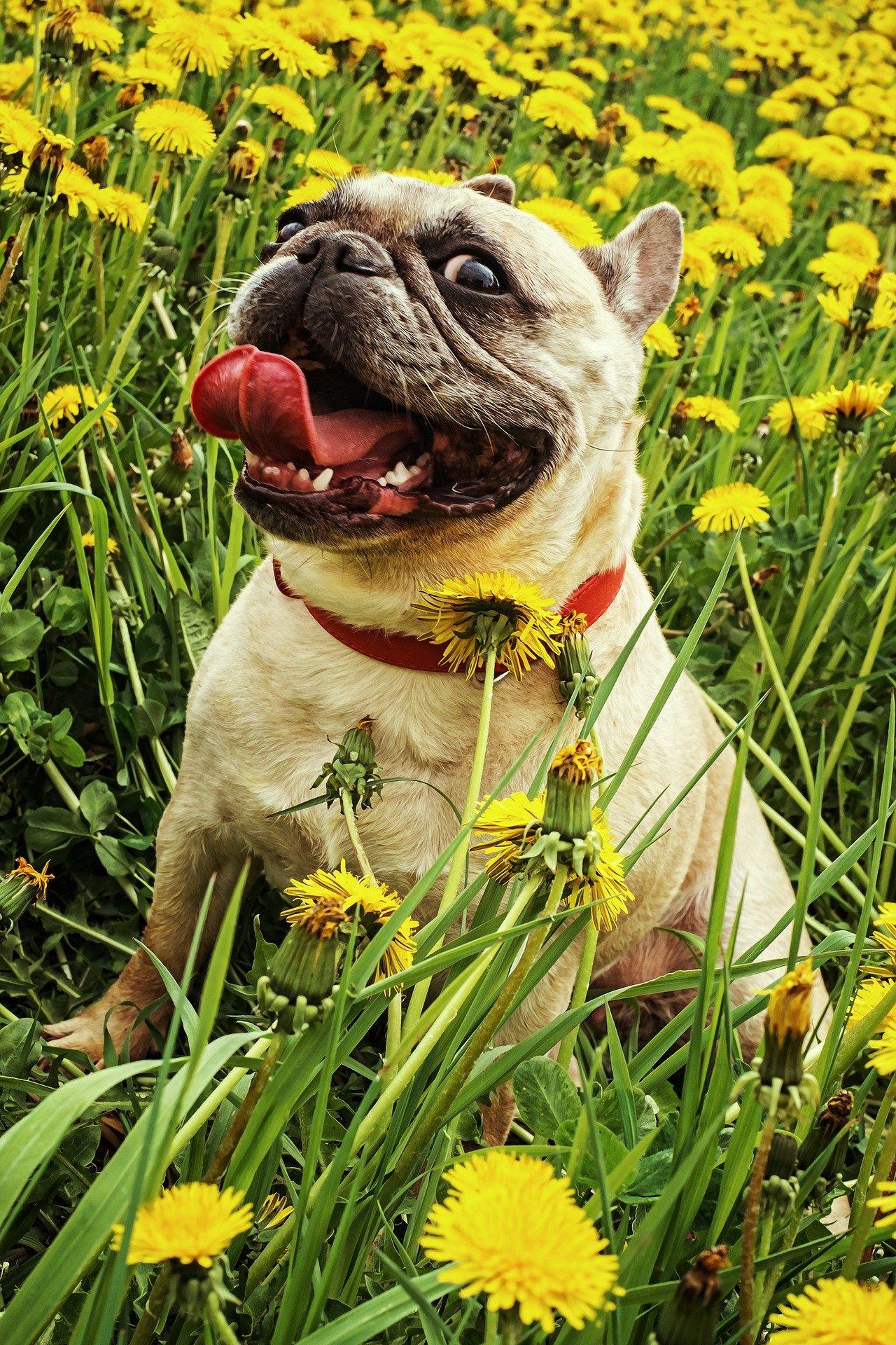 Migliori crocchette per cani consigli utili per l'acquisto
