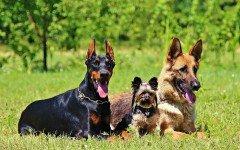 Test Dogalize: Quale taglia di cane è ideale per te?