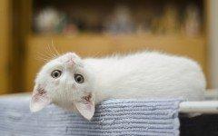 Gatto maschio o femmine: le caratteristiche