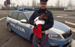 Padova, cane lanciato dal finestrino: si cercano i responsabili