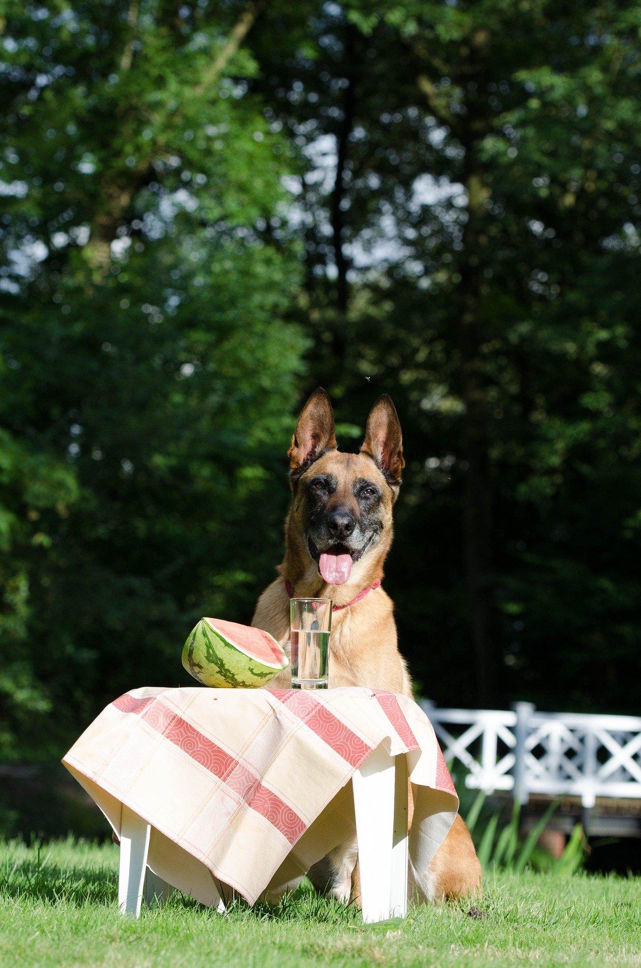 Alimentazione del cane in estate: cosa dargli da mangiare