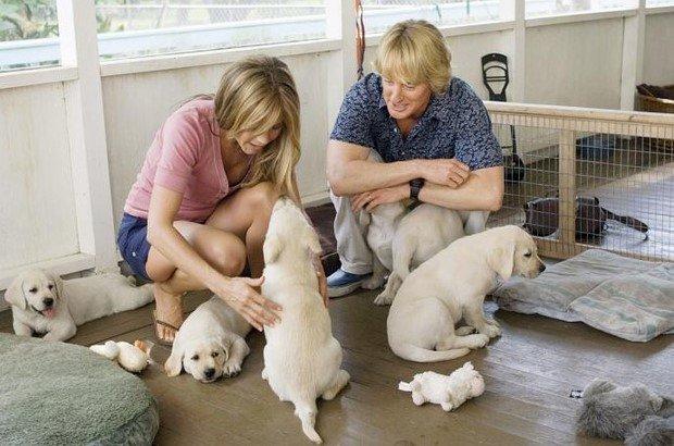 Film con cani: quali sono i più belli e i più visti?