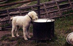 Alimentazione del cane latte dannoso? Scopriamolo insieme