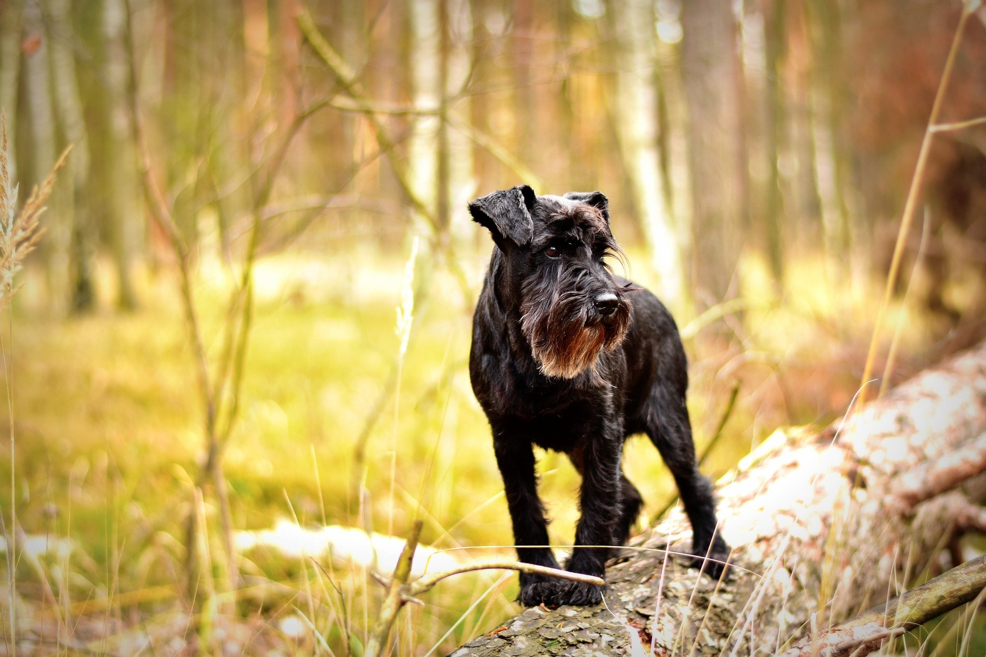 What are Hypoallergenic dogs about? Let's find out - Dogalize