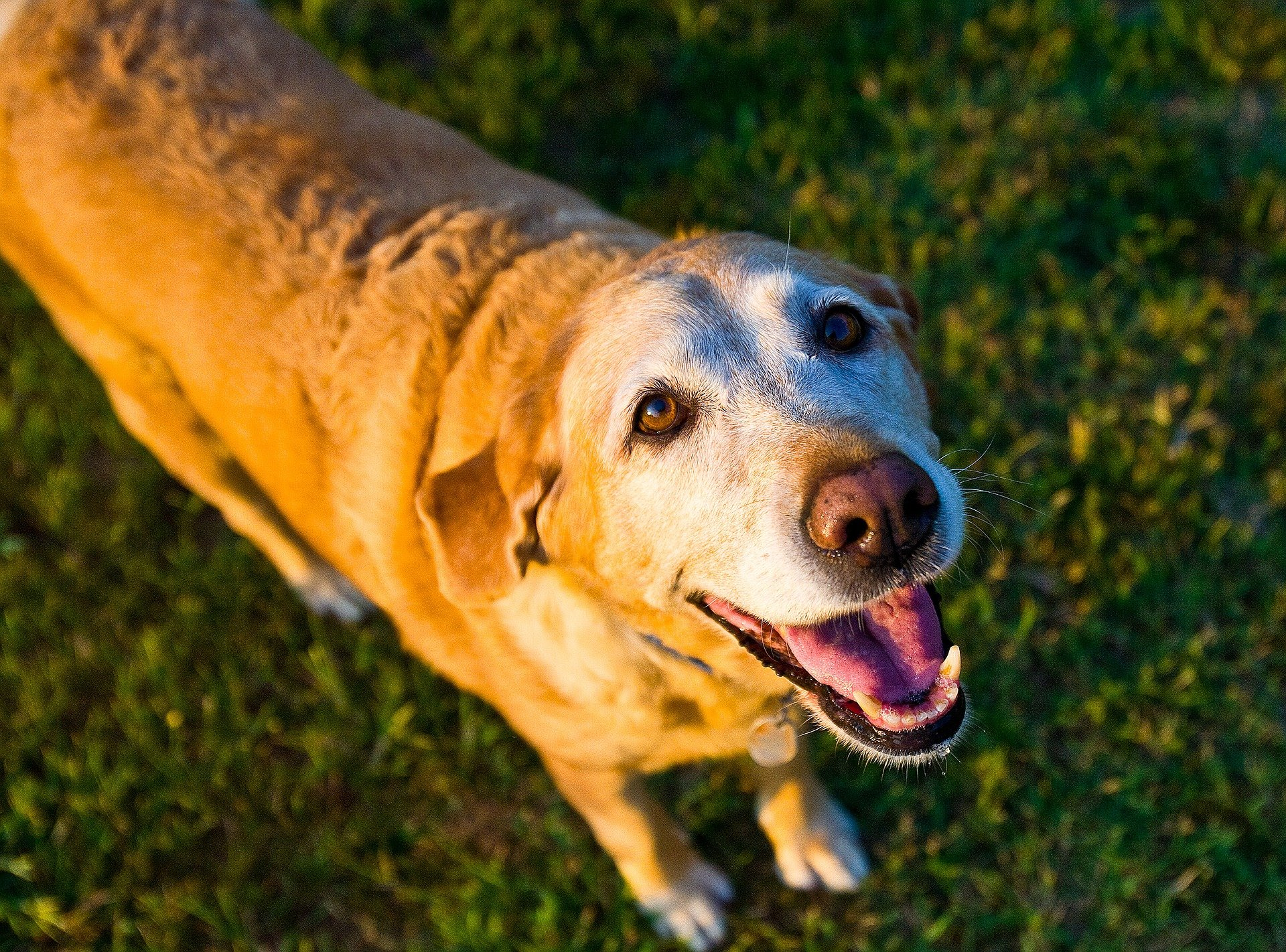Arthritis in Dogs: Causes, Symptoms, and Treatment