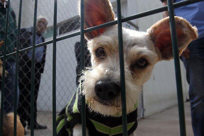 En Guadalajara perros maltratados buscan una nueva vida