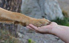 La zampa del cane: tutto ciò che c'è da sapere