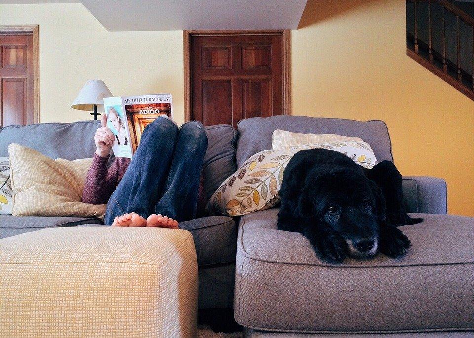 los mejores perros para apartamentos