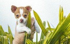 Le razze di cani piccolissimi da podio: quali sono?