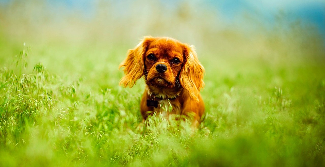 how to get rid of roundworms in dogs