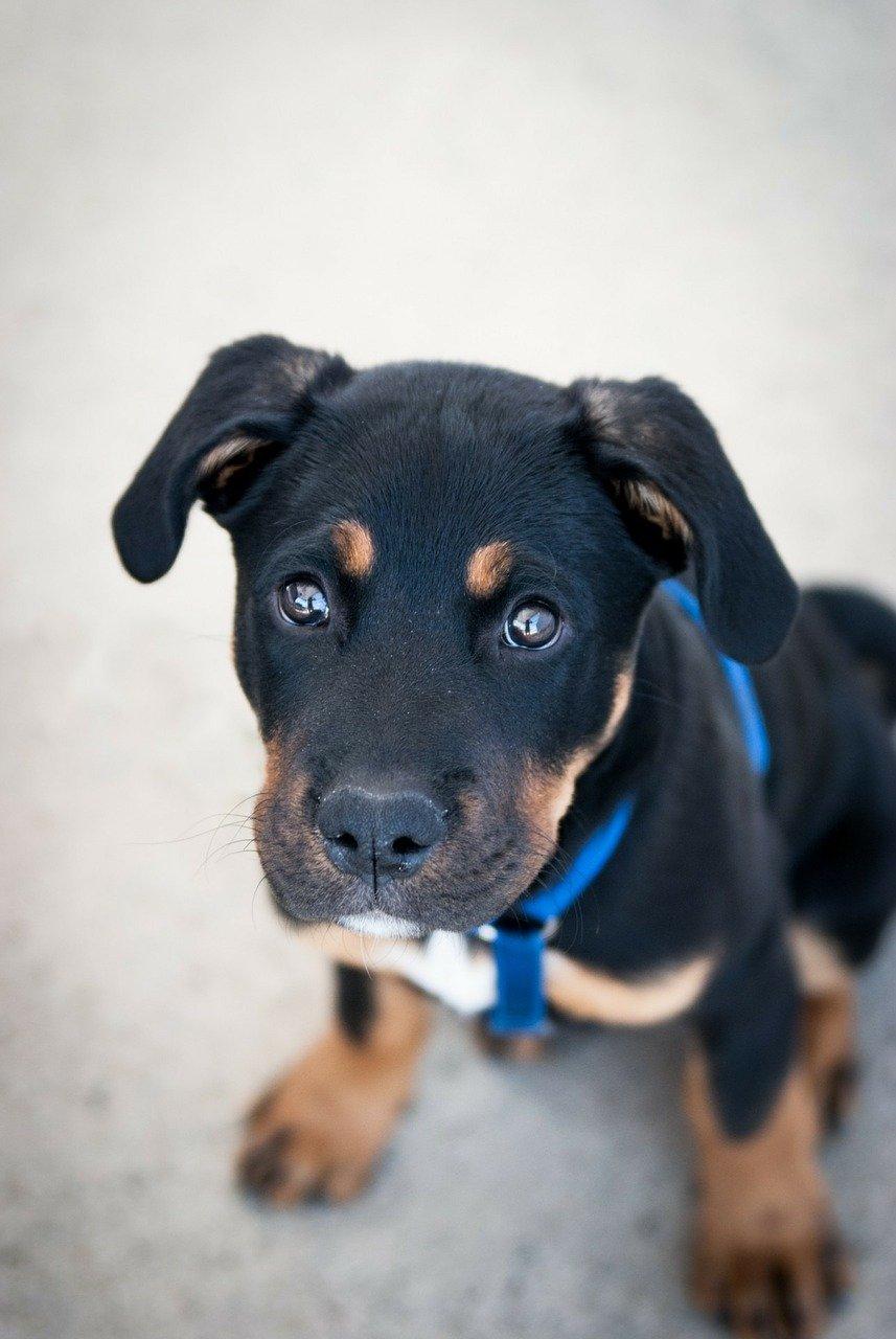 Disturbi dermatologici del cane e problemi legati alla vista