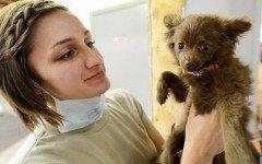 Laparoscopia veterinaria: i pro e i contro della tecnica