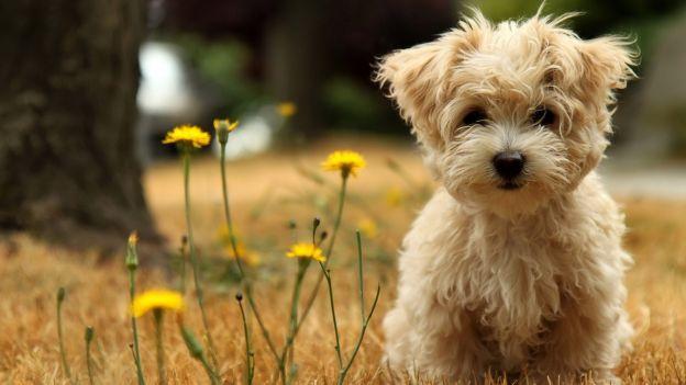 Ben noto Cani piccoli e cani di piccola taglia: - Dogalize PF66