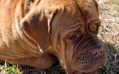 Eutanasia cane: una scelta difficile per i padroni