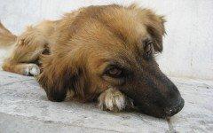 Cane viene investito: il padrone deve pagare i danni