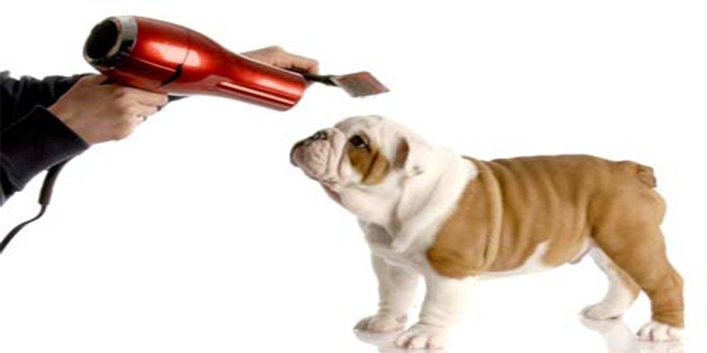 Toelettatura cane lavare cane