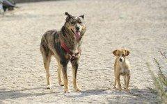 Bonus cane: agevolazioni previste anche per il 2017