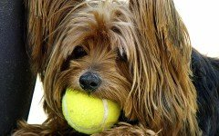 Ball boys? No, ball dogs in Brazil's Tennis Tournament! An amazing initiative that all tournaments should replicate!
