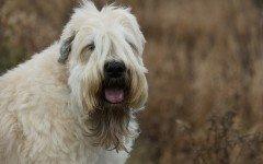 L' alimentazione del cane in calore: la dieta adatta