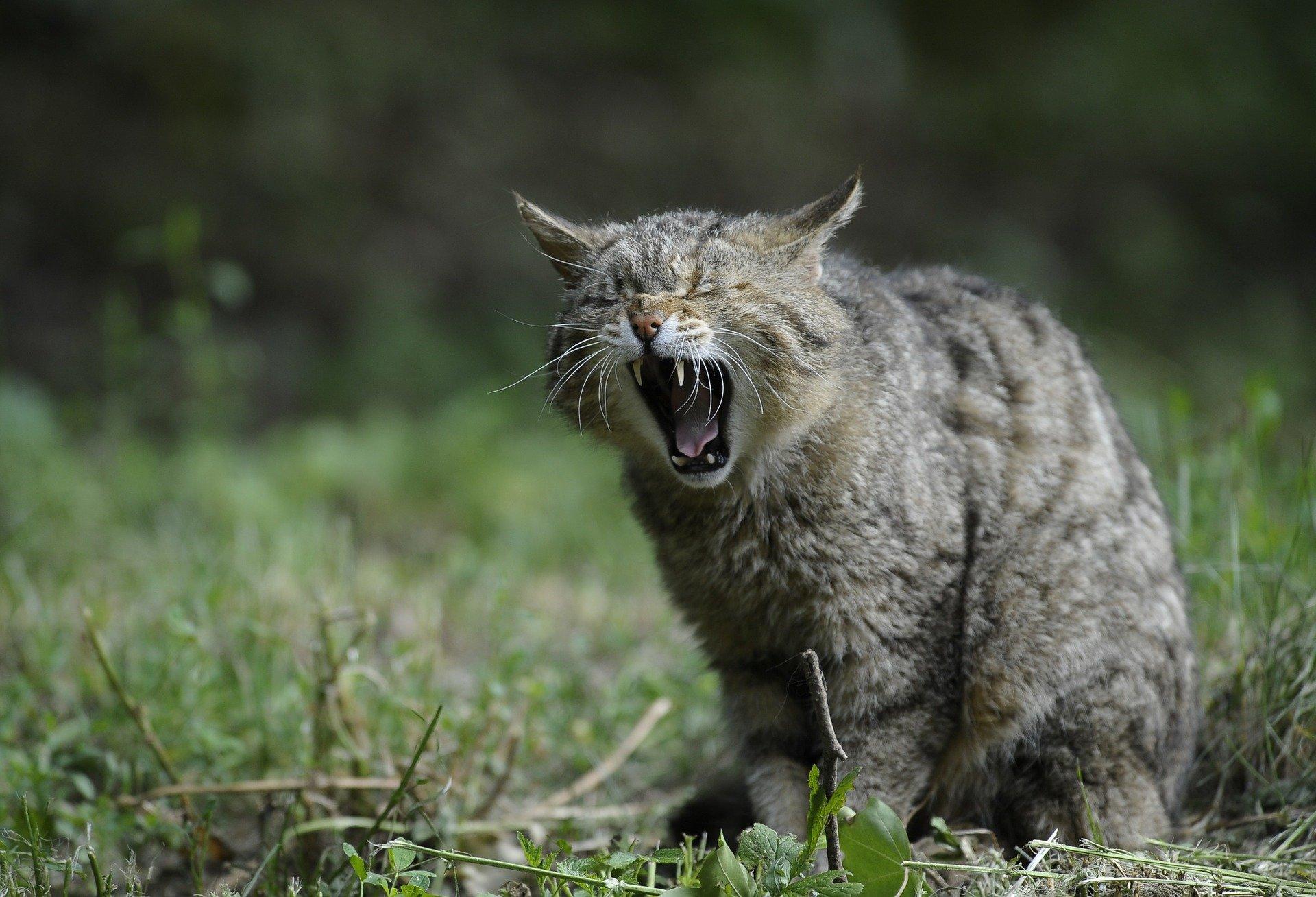 Perché i gatti mordono, le possibili cause