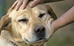 Amigos del perro: los amigos que ayudan