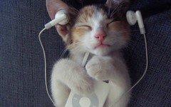 Musica para gatos: relajación para los felinos
